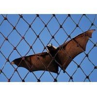Bat Netting image