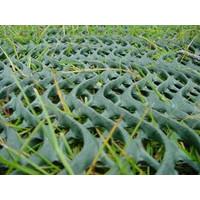 Grass Reinforcement Mesh image