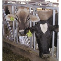 Dairy Farms image