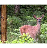 Deer Fence image