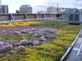 Vegetative Eco Roof Tray System Image