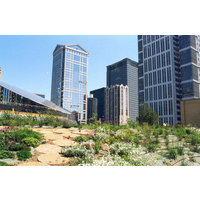 Vegetated Roofs image