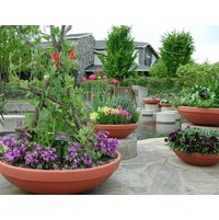 Low Bowl Planters image