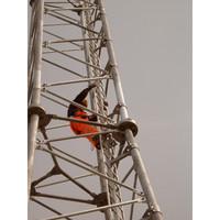 Telecommunication image